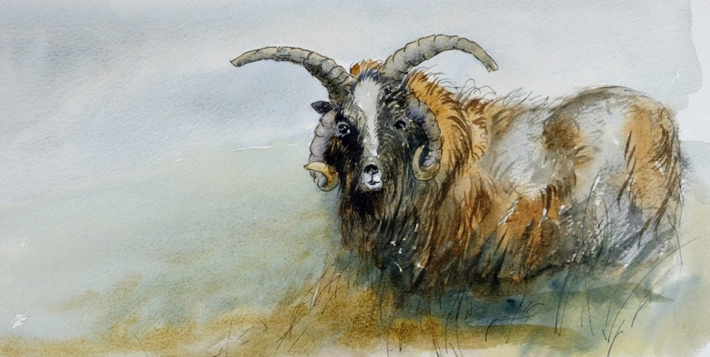 Wild Goat with 4 large horns